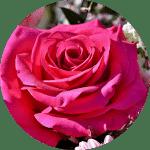 mariage, Agence Andromède, évènements, Wedding Planner, Event Planner, union, bretagne, Morbihan, Vannes, Lorient, Quimper, Pontivy