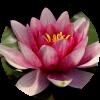 formule Fleur de Lotus, Wedding Planner, Event Planner, Agence Andromède, évènements, mariage, union, célébration, Bretagne, Morbihan, Vannes, Lorient, Quimper, Pontivy