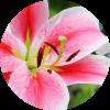 Formule Fleur de Lys, formule de mariage, Agence Andromède, évènements, Wedding Planner, Event Planner, mariage, Bretagne, Morbihan, Vannes, Lorient, Quimper, Pontivy