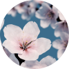 Formule mariage, Fleur de Sakura, Agence Andromède, évènements, Wedding Planner, Event Planner, mariage, Bretagne, morbihan, Vannes, Lorient, Quimper, Pontivy