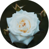 mariage, Agence Andromède, évènements, Wedding Planner, Event Planner, union, bretagne, Morbihan,Vannes, Lorient, Quimper, Pontivy